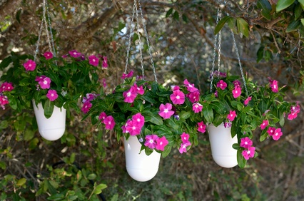 Hang Them Almost Anywhere. Using Baskets For Container Gardens ...