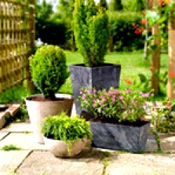 Using Shrubs In Container Gardens
