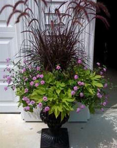 Enjoy container gardening for Tall ornamental grasses for pots