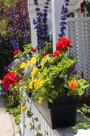 Colorful window boxes say welcome!