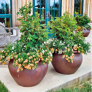 Choosing Garden Containers