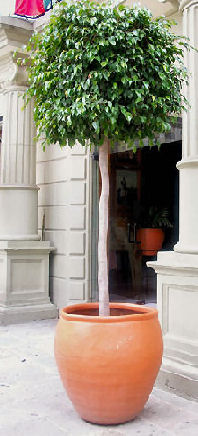 Trees In Container Gardens Enjoy