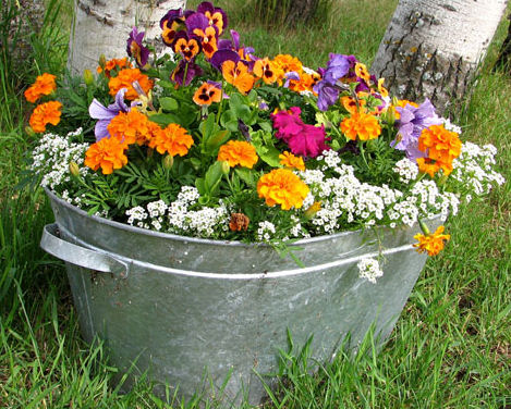Merveilleux Container Gardening With Annuals Pretty Much Eliminates Weeding Chores.  However, Pull Any Weeds That Do Come Up In The Container To Keep Harmful  Insects ...