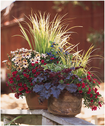 Using texture in container garden designs.