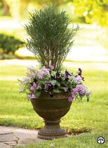 Grow shrubs in containers.