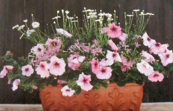 Almost unlimited choices for flowers to grow in containers.
