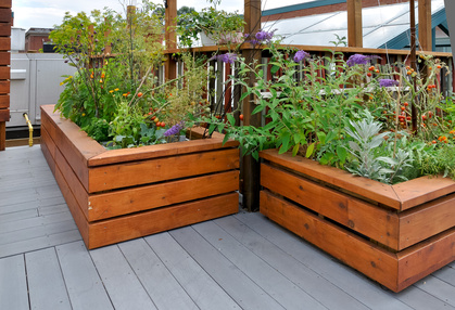 Square or rectangular planters are great for container vegetable gardening.