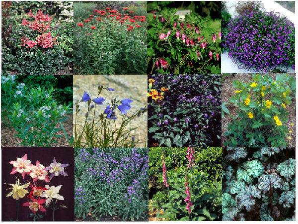 Plants for Container Gardening in Shade