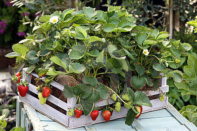 Container Vegetables Enjoy container gardening choose the best container container vegetable workwithnaturefo