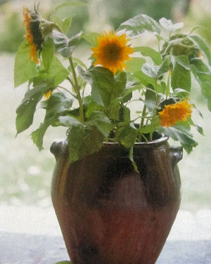 Drought Resistant Plants For Containers Enjoy Container