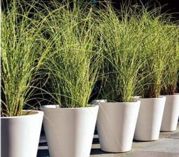 Landscaping With Container Gardens Enjoy Container Gardening