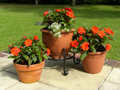 Choosing Garden Containers Enjoy Container Gardening