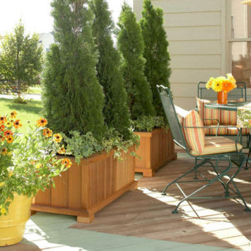 Create a wall with shrubs or trees in containers.