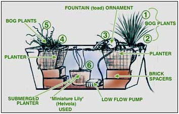 This Diagram From The Denver Cooperative Extension Service At Colorado State University Shows How You Might Set Up A Container Water Garden
