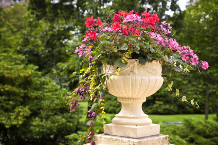 Container garden design in a formal urn